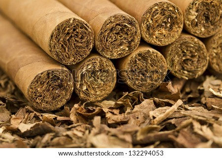 A macro shot of cigars on tobacco. These cigars are robusto sized.