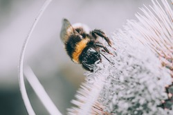 A macro view of a bee landed on a white flower on a blurry background