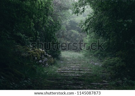A magical forest path in dim morning light in Vikos, Greece.