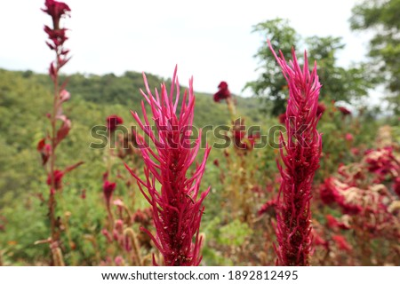a magnificent red flower deep in the jungle