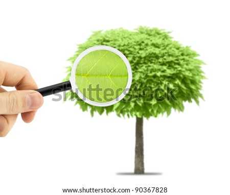 A magnifying glass with tree on a background