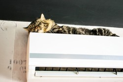 A Maine Coon cat is sleeping on the air conditioner.