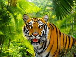 A Malaysian tiger in a rainforest under the sun, soft focus background