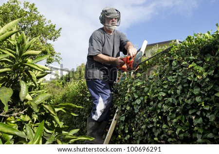 A male gardener trimming plants in a garden with a trimmer.