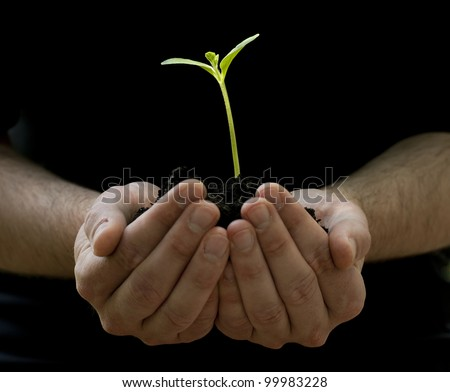 A male hands hold a young plant, seedling. Birth of a new life.