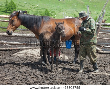 A man and a woman milking a horse that Kazakhs would make kumis