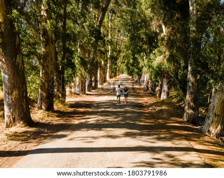 A man and a woman walking among the eucalyptus trees on both sides of the road. Stok fotoğraf ©