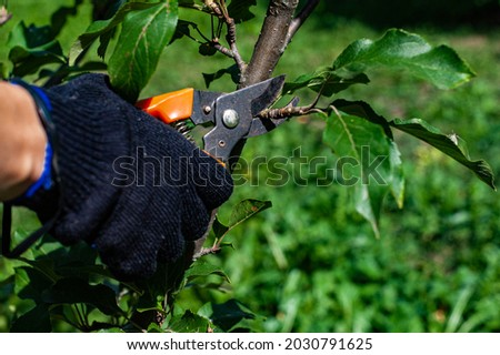 a man cuts a branch with a small garden shears. High quality photo Foto d'archivio ©