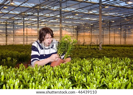A man examining plants in a glasshouse