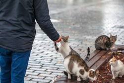 A man feeds stray cats, People feed kittens sausages. Problem of street animals. Cats live on street.