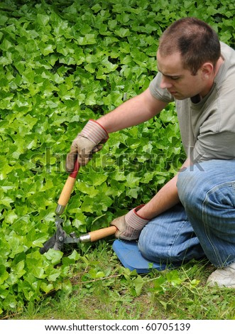 A man holding hedge shears, trimming some ivy near his front yard grass lawn.