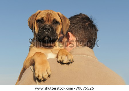 a man holding on his shoulder his puppy Bull Mastiff