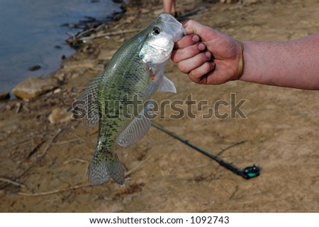 A man holds a largemouth bass up at the shoreline of a rural lake