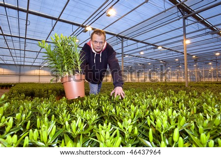 A man in the middle of a huge glasshouse, picking up a potted plant and showing it