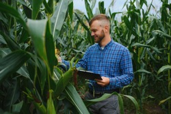 A man inspects a corn field and looks for pests. Successful farmer and agro business