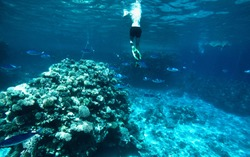 A man is swimming among coral reefs, amazing sea