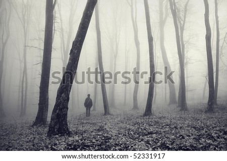a man lost in a magical forest