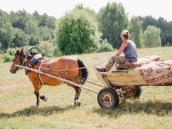 A man on old wooden cart pulled by one brown horse in a field. Village life in Belarus