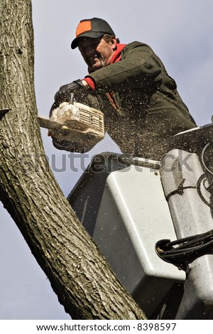 A man removing a dead tree from a bucket lift and chain saw.
