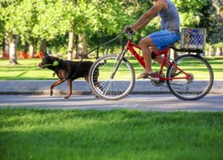 a man riding his bicycle  behind a running dog with a ball thrower in his mouth on a bike path in a city