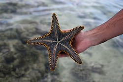 A man's hand holds a live, large beautiful and bright starfish in his hands. Starfish on the reverse side with tentacles on the background of water. Starfish pulled from the ocean