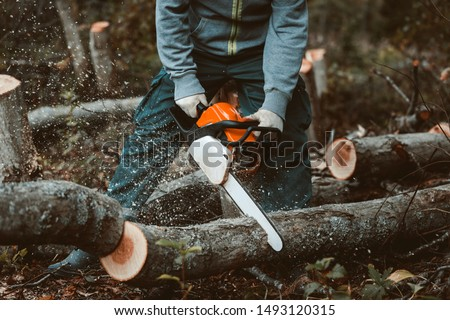 a man sawing a tree with a chainsaw. removes forest plantations from old trees, prepares firewood.