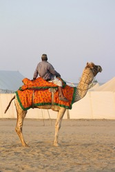A man sitting on a camel in desert. Alone. Camel decorated.