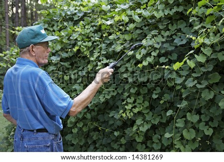 A man spraying his muscadine grape plants with pesticides.