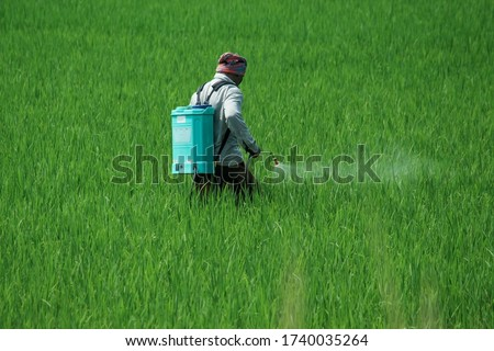 A man spraying insecticides manually by hand on a agriculture green field full of green new corp plants in a sunny daylight Foto stock ©