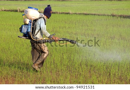 A man spraying pesticides in the paddy field