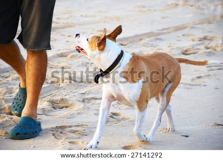 A man taking his dog for a walk