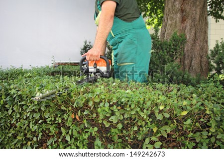 A man trimming hedge in city park
