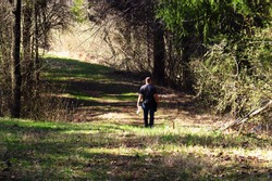 A man walking up a broad path cut through the woods on a sunny day, shadows cast about on the ground.