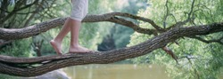 A man walks barefoot on a large tree branch. Close-up of the legs. Male feet on a thick willow branch in a green park by the lake.