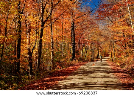 A man walks his dog on a lonely Vermont road in autumn splendor.  A blue autumn sky is accented by fall colors of red and gold, as leaves fall from the trees. - stock photo