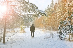 A man walks in the winter forest along a snowy path. The concept of a healthy lifestyle and outdoor activities.