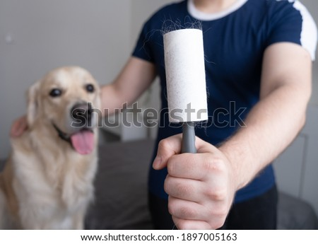 A man with a dog removes the fur from a blue T-shirt with a lint roller, close-up. Stockfoto ©