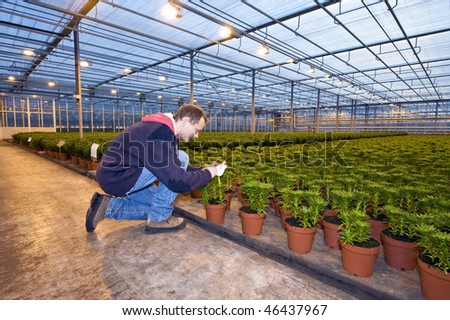 A man,writing on the identification tag of a row of potted plants inside a huge greenhouse