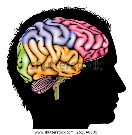 A mans head in silhouette with a sectioned brain. Concept for mental, psychological, brain development, learning and education or other medical theme