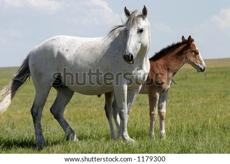 A mare and her young baby in an American West landscape.