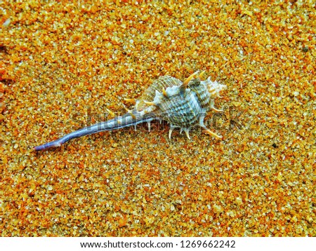 A marine invertebrate on the rough sand at the beach #1269662242