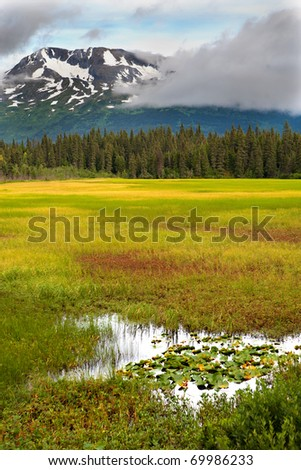 A marsh, meadow, trees and snow-capped mountains in the vibrant colors of late summer on Alaska's Kenai Peninsula