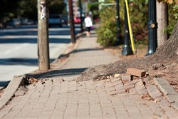 A massive tree root pushes through the bricks of a sidewalk