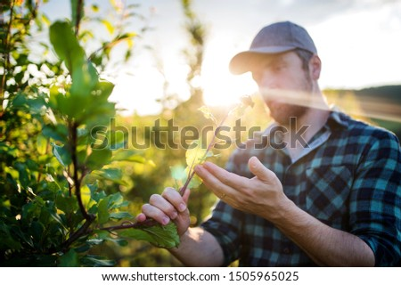 A mature farmer working in orchard at sunset.