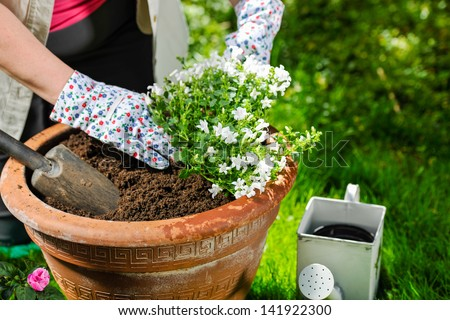 A mature woman planting flowers, sunny day
