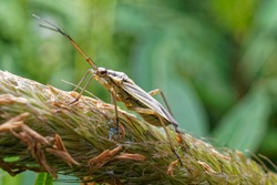 A meadow plant bug is a common grass seed pest.