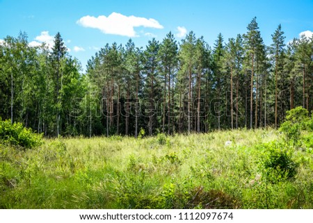 A meadow with tall grass and wild flowers in the woods. Sweden
