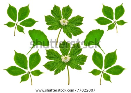 A medicinal plants collection featuring three of the world's most important medicinal plants - Ginseng, Ginkgo, and Goldenseal.