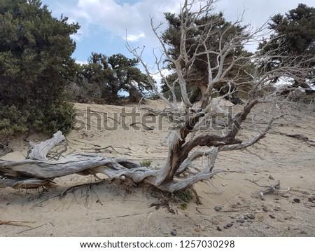 A mediterranen tree