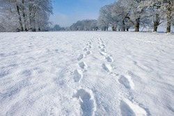 A medium shot of footprints on fresh snow on a pathway in winter.